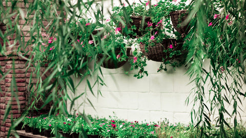 Basics of Vertical Gardening