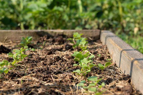 Benefits of a raised bed garden