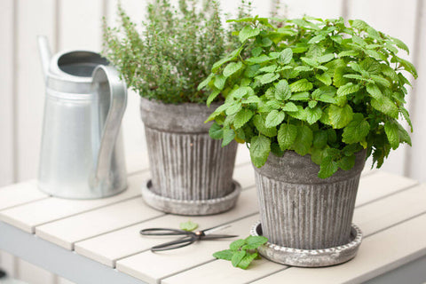Watering for Container Gardens