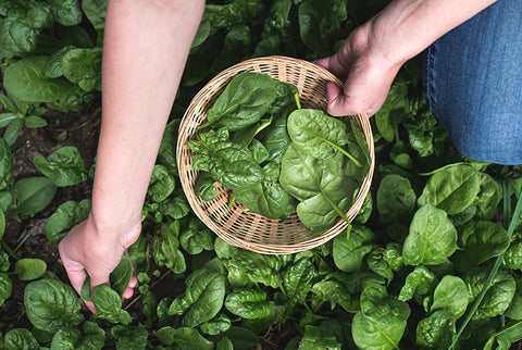 Grow More Food At Home