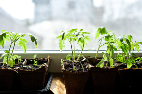 Consider Growing Space