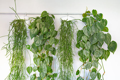 Watering for Hanging Gardens