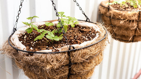 Grow in Hanging Baskets
