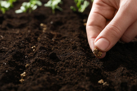 A little about heirloom seeds