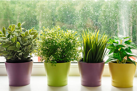 Move Pots and Planters