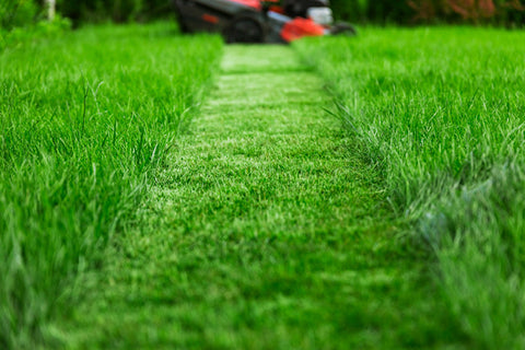 Timely Mowing Of The Lawn