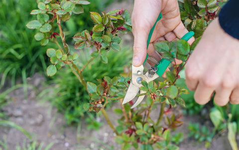Prune Your Plants