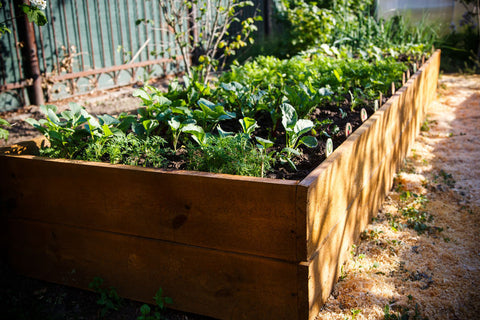 Placement of a raised bed garden
