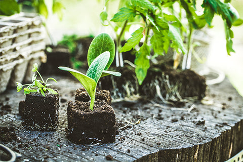 Know What Seeds To Sow