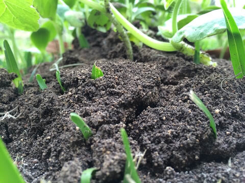 Types of Organic Fertilizers