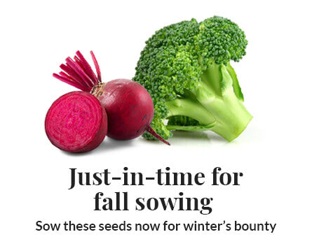 Fall Sowing