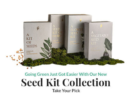 Green Gifting Kits