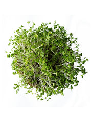 Cauliflower Microgreen Seeds