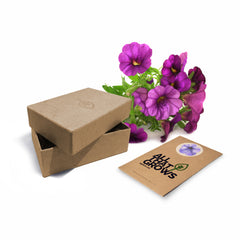 Balcony Flower Seeds Kit