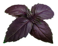 Basil Purple Seeds