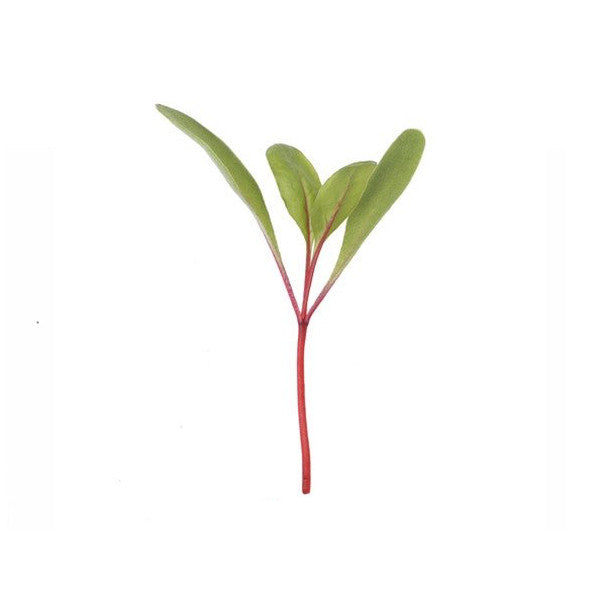 Beet Root Microgreen Seeds