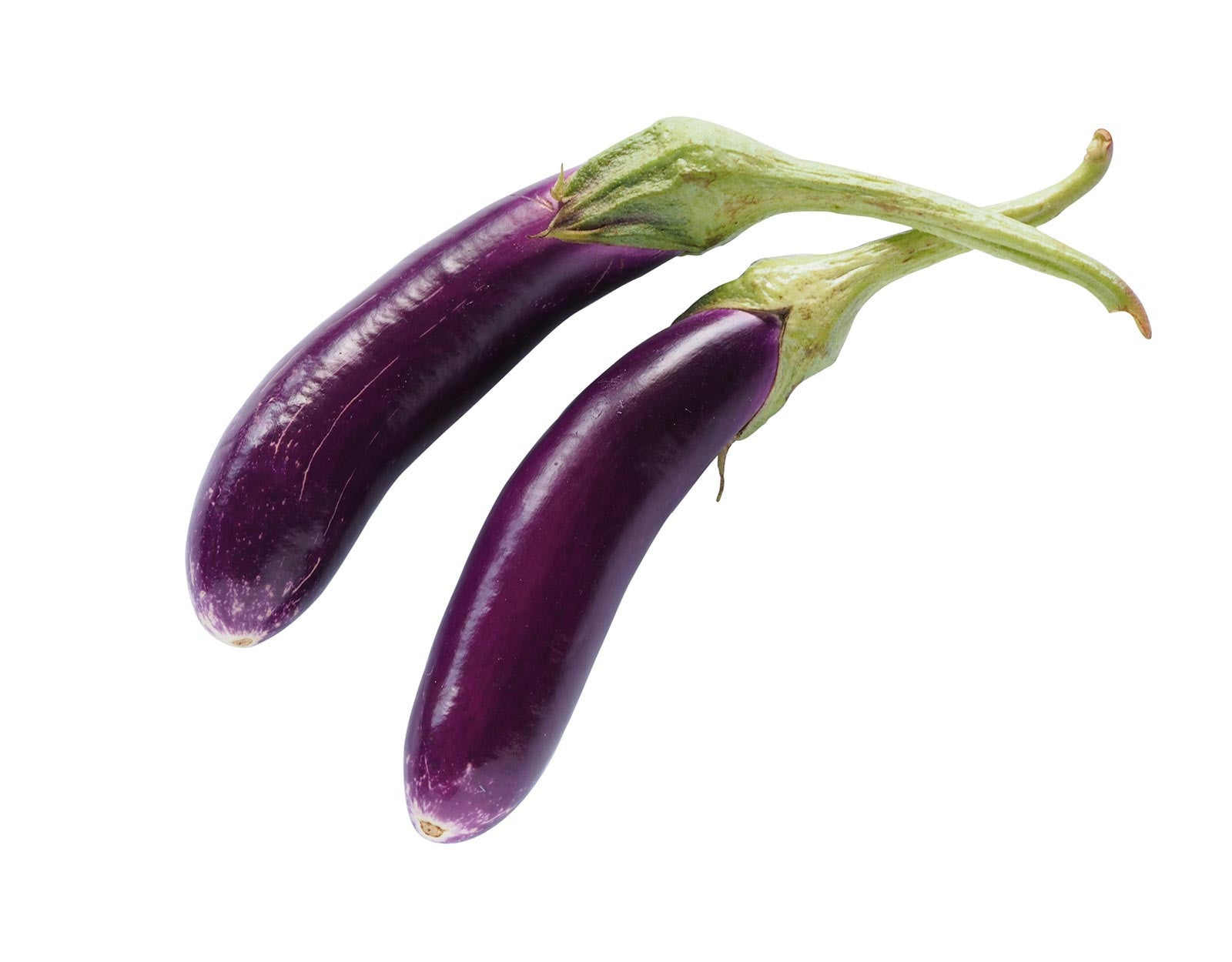 how to grow brinjal from seeds in pots