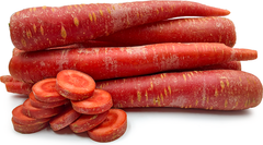 Carrot Red Seeds