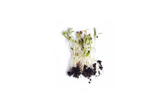 Spinach Microgreen Seeds