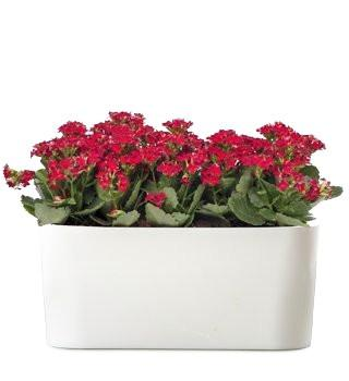 Rectangular Window Sill planter- Self Watering