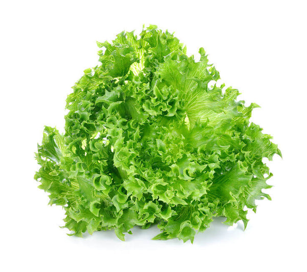 Lettuce Grand Rapids Seeds