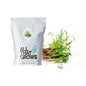 Black Carrot Microgreen Seeds