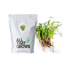 Red Carrot Microgreen Seeds