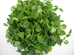 Fenugreek (Metha) Seeds