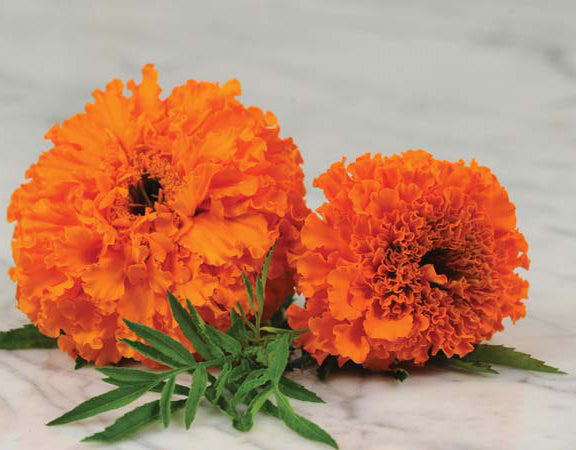 Marigold Hawaii Orange Seeds
