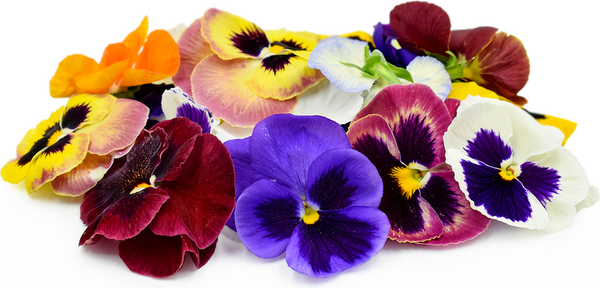 Pansy Swiss Giants Mix Blossoms