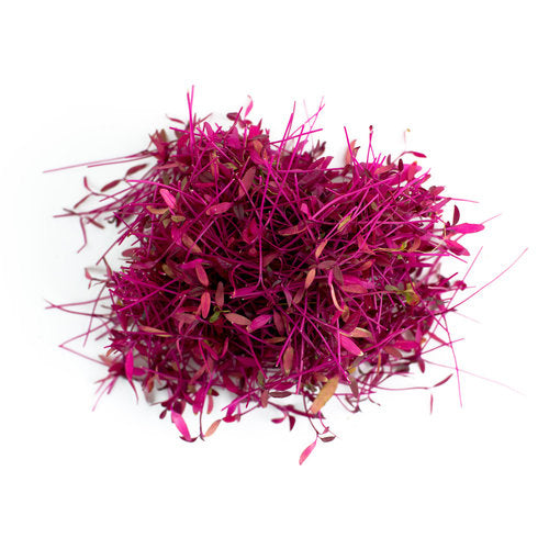 Amaranthus Red Garnet Microgreen Seeds