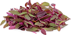 Amaranthus Red Microgreen Seeds