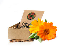 Assorted Flower Seeds Kit