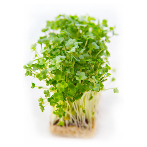 Garden Cress Microgreen Seeds