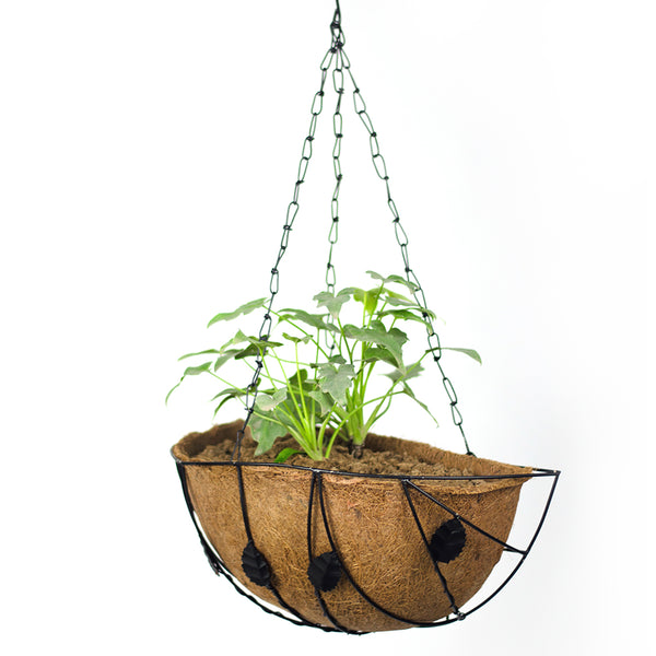 Wall Mount Planter with metal frame (pack of 5)