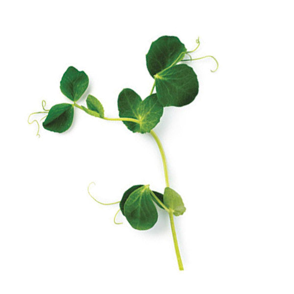 Peas microgreen seeds