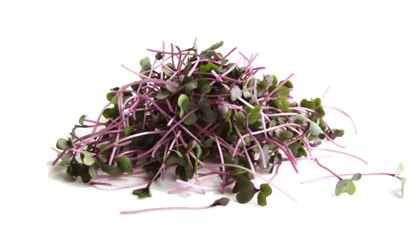 Red Cabbage Microgreen Seeds