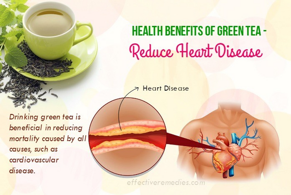 Green Tea Can Reduce the Risk of Having Heart Disease
