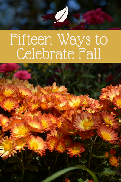15 Fall Home Decor and Gardening Ideas