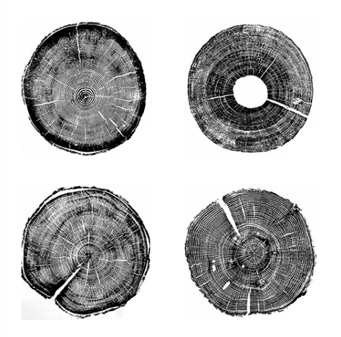 """Tree Rings"" Black And White Canvas Wall Art 
