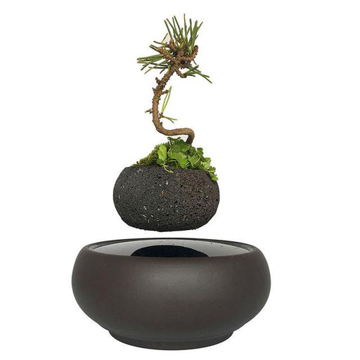 Zodo Magnetic Levitation Floating Plant Decor