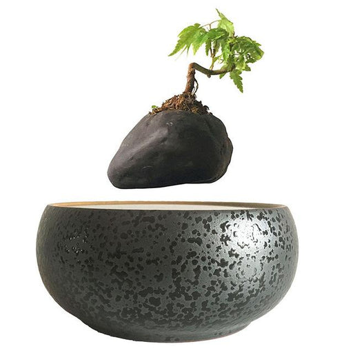 Lolove Magnetic Levitation Floating Plant Decor