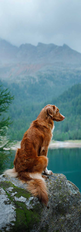 Gut Guard Probiotics For Dogs