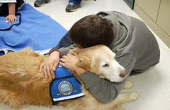 deep pressure therapy dog
