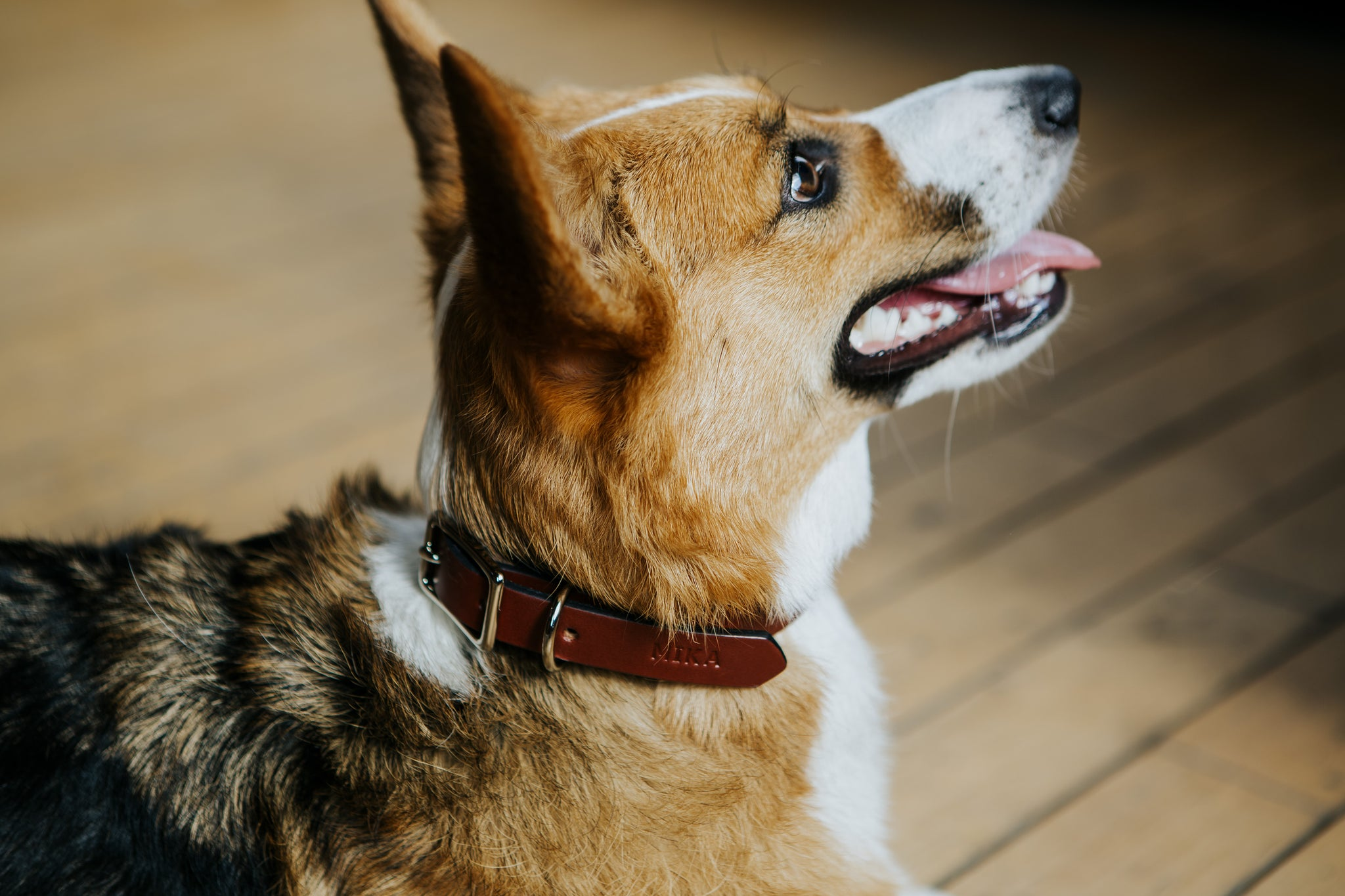 Leather Dog Collar - Peather