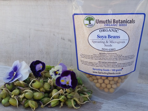 Organic Soy Beans Sprouting Seeds - 100g