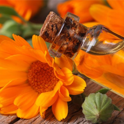 Calendula oil Botanical name: Calendula officinalis
