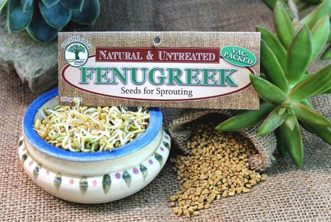 Fenugreek seeds Botanical name: Trigonella Foenum-graecum