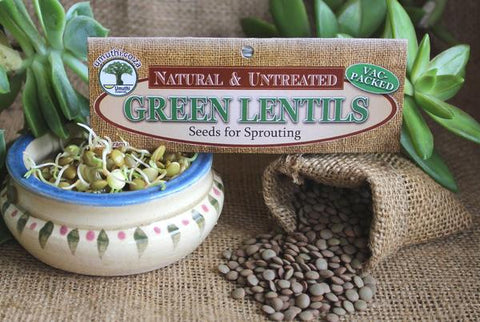 Lentils, green Botanical name: Lens (Culinaris)