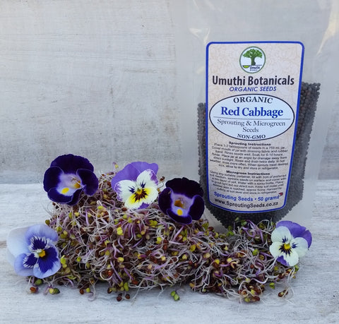 Organic Red Cabbage Sprouting Seeds - 50g